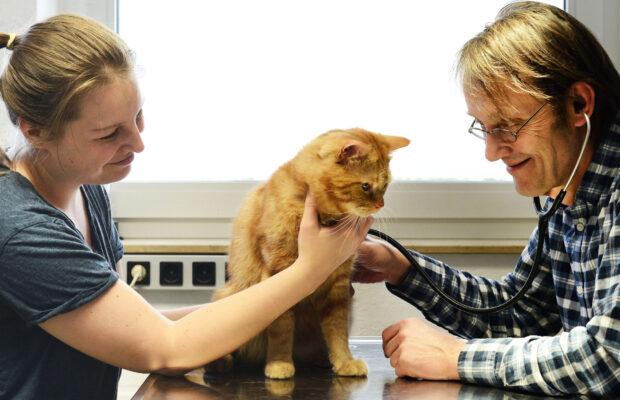 Behandlung Katze
