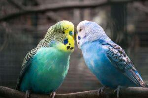 Patient Vögel
