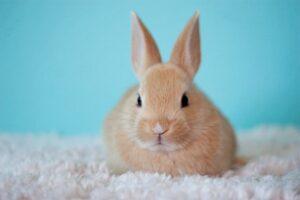 Patient Kaninchen